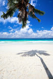 Palm tree shadow on sand. Palm tree shadow on tropical white sand beach Royalty Free Stock Images