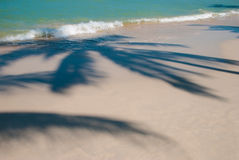 Palm tree shadow. On tropical beach Royalty Free Stock Image