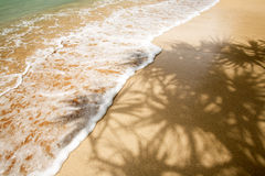 Palm Tree Shadow in Tropics Stock Photos