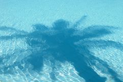 Palm tree shadow on water Stock Image