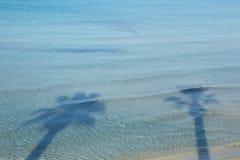 Palm tree shadows Stock Image