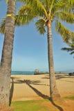Palm tree shadows 2 Royalty Free Stock Photo