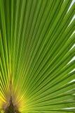 Palm tree sheet Stock Photos