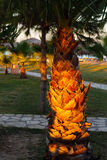Palm tree shined with a sunlight Royalty Free Stock Photography