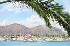 Palm tree with ships and yachts on background. Royalty Free Stock Images