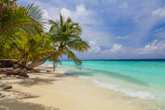 Palm tree on the shore of the Maldives Royalty Free Stock Photos