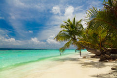 Palm tree on the shore of the Maldives Stock Images