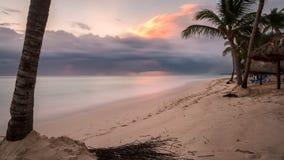 Palm Tree on Shore Near Body of Water Under Orange Sunset Stock Photo