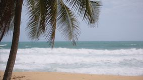 A palm tree on the shore of the ocean. tropical paradise stock video footage
