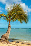 Palm Tree at the Shore Stock Photo