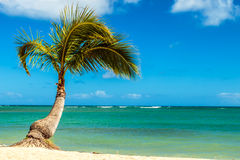 Palm Tree at the Shore Royalty Free Stock Photos
