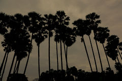 Palm tree sihouette royalty free stock photo