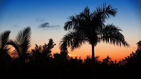 Palm tree silhoette on sunset stock video