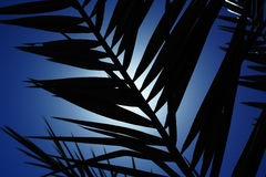 Palm tree silhouette. Silhouette of a palm tree branch against the sun and blue sky royalty free stock photo