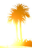 Palm Tree in Silhouette Royalty Free Stock Image