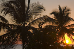Palm Tree Silhouette. Silhouette of Palm Trees at Sunset royalty free stock photo