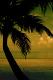 Palm tree silhouette. On beach Royalty Free Stock Photos