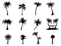 Palm tree Silhouette. Black Silhouette of palm trees on white background Stock Image