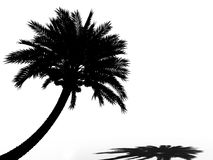 Palm tree silhouette 3d cg Royalty Free Stock Photography