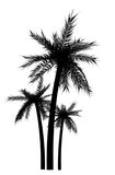Palm tree silhouette. Digital art work Royalty Free Stock Images