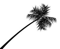 Palm tree silhouette. Vector illustration royalty free illustration