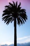 Palm tree silhouette above colorful blue purple sky Stock Image