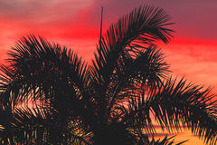 Palm Tree Silhouette Against a Vivid, Colourful Sunset Sky. Looking up at a palm tree silhouette against a vivid, colorful, Caribbean sunset sky. Grenada Royalty Free Stock Photos