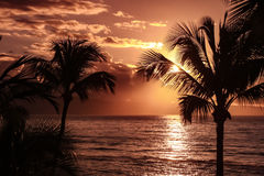 Free Palm Tree Silhouette Against Yellow Sunset Sky - Hawaii Royalty Free Stock Photos - 81476518