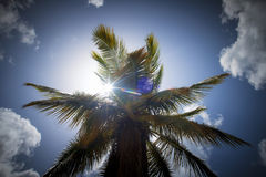 Palm tree. Silhouette with blue sky, sun and soma clouds Stock Photos