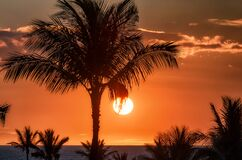 Palm tree silhouette with bright sun and red sky at sunset.