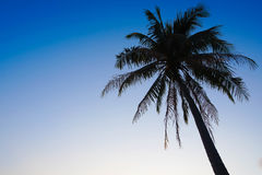 Palm Tree Silhouette on Clear Blue Sky Background Stock Image