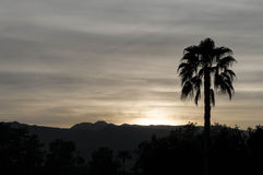 Palm Tree Silhouette-Dusk in Palm Springs California Stock Image