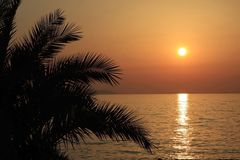 Palm tree silhouette golden sunset Royalty Free Stock Photos