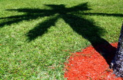 Palm Tree Shadow on Grass. A palm tree casts a large shadow on the grass in a park Royalty Free Stock Photography