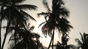 Palm tree silhouette with green leaf and sun ray on tropical island, exotic place stock footage