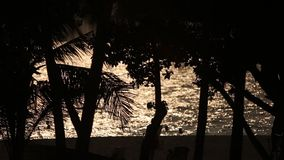 Palm tree silhouette with green leaf and sun ray on tropical island, exotic place stock video footage