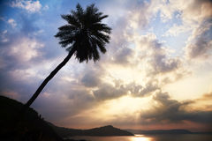 Palm tree silhouette Royalty Free Stock Image
