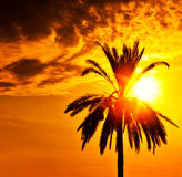 Palm tree silhouette over sunset Stock Photography