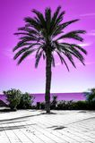 Palm tree silhouette with pink sky and sea in the background. Different kind of wallpaper with gradient colors evoking summer. Vibes and vacation feelings royalty free stock photos