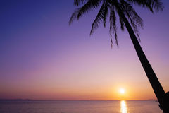 Palm Tree Silhouette on Purple Sunset Background Royalty Free Stock Photography