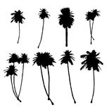 Palm Tree silhouette's Stock Photos