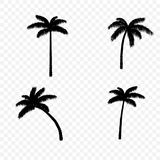 Palm tree silhouette set. Palm tree black silhouette set on transparent background. Vector illustration Stock Illustration