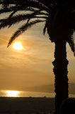 Palm Tree Silhouette. A shot of a Palm tree at sunset Royalty Free Stock Image