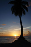 Palm tree silhouette. D against the sunset. Photo taken at Gun Beach on the island of Guam located in the Marianas islands Stock Images