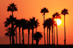 Palm Tree Silhouette Royalty Free Stock Images