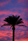 Palm Tree Silhouette Sunset Royalty Free Stock Photo