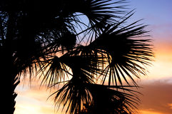 Palm tree silhouette with sunset Stock Photo