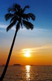 Palm tree silhouette at sunset stock images