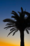 Palm tree silhouette at sunset. Palm tree on a beach at sunset royalty free stock photo