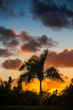 Palm tree silhouette on sunset Stock Photography
